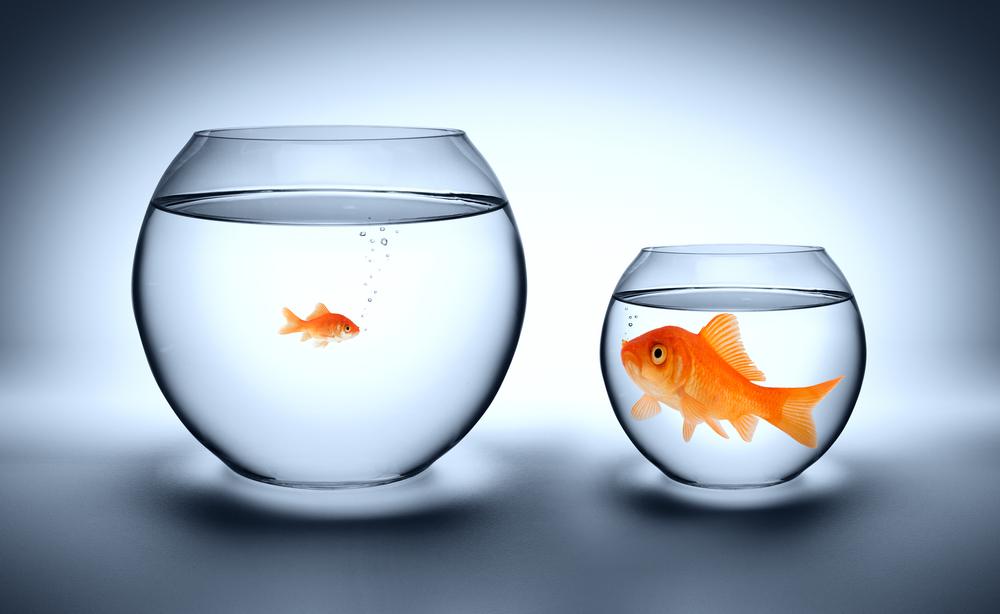 Как сравнить конкурентов в контекстной рекламе - фото