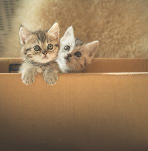 Котята в маркетинге интернет-магазина